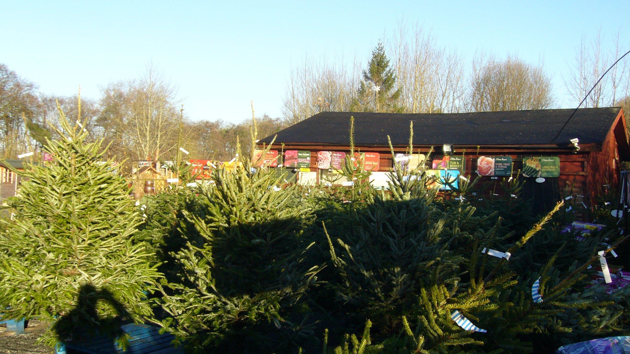 Carr Bank Garden Centre Real Fresh Christmas Trees